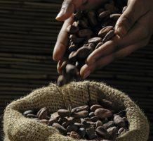 Can cocoa flavanols prevent disease?