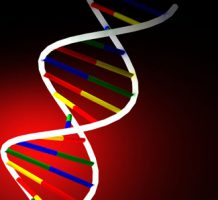 Genetic predisposition to obesity found