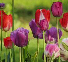 Ways to ease your gardening workload